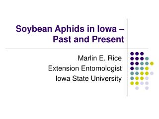 Soybean Aphids in Iowa   Past and Present