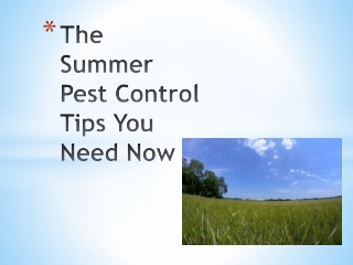The Summer Pest Control Tips You Need Now