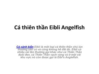 Cá thiên thần Eibli Angelfish