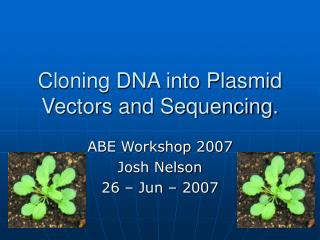 Cloning DNA into Plasmid Vectors and Sequencing.
