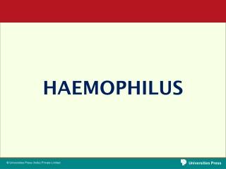 Hemophilus Influenzae Endocarditis