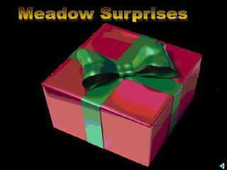 Meadow Surprises