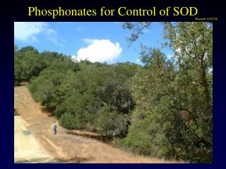 Phosphonates for Control of SOD