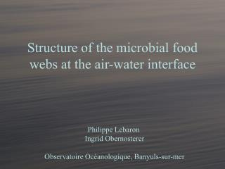 Structure of the microbial food webs at the air-water interface