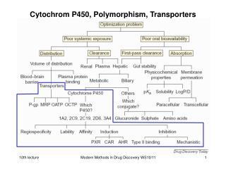 Cytochrom P450, Polymorphism, Transporters