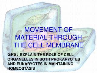 MOVEMENT OF MATERIAL THROUGH THE CELL MEMBRANE