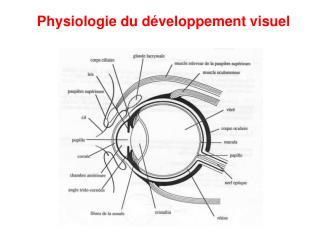 Physiologie du d veloppement visuel
