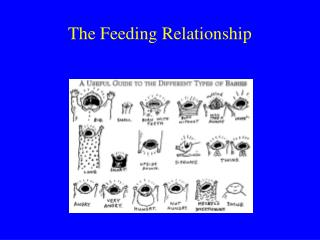 The Feeding Relationship