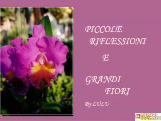 PICCOLE   RIFLESSIONI            E    GRANDI             FIORI  By LULU