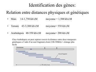 Relation entre distances physiques et g n tiques