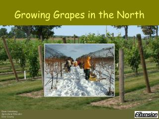 Growing Grapes in the North