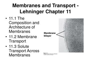 Membranes and Transport - Lehninger Chapter 11