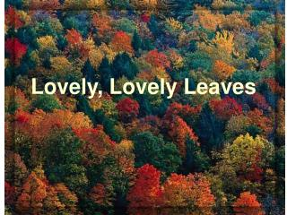 Lovely, Lovely Leaves
