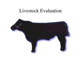 Livestock Evaluation