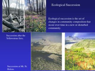Ecological succession is the set of changes in community composition that occur over time in a new or disturbed communit