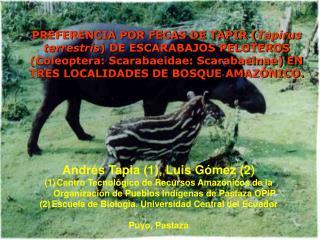 PREFERENCIA POR FECAS DE TAPIR Tapirus terrestris DE ESCARABAJOS PELOTEROS Coleoptera: Scarabaeidae: Scarabaeinae EN TRE