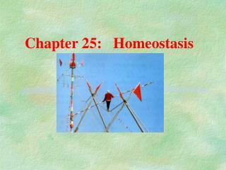 Chapter 25:   Homeostasis
