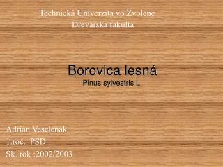 Borovica lesn