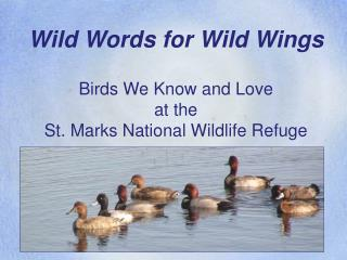 Wild Words for Wild Wings  Birds We Know and Love at the St. Marks National Wildlife Refuge