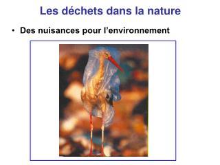 Les d chets dans la nature