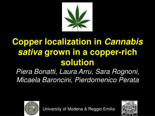 Copper localization in Cannabis sativa grown in a copper-rich solution Piera Bonatti, Laura Arru, Sara Rognoni,  Micaela