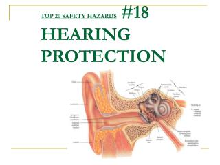 TOP 20 SAFETY HAZARDS 18 HEARING PROTECTION