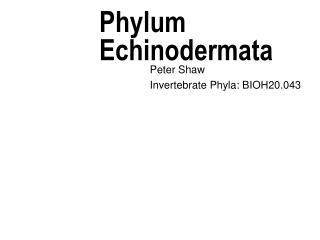 Phylum Echinodermata