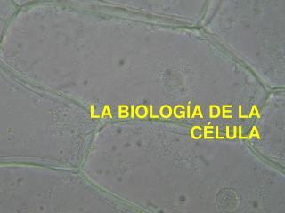 LA BIOLOG A DE LA C LULA
