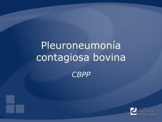 Pleuroneumon a contagiosa bovina