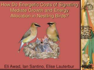 How Do Energetic Costs of Signaling Mediate Growth and Energy Allocation in Nestling Birds