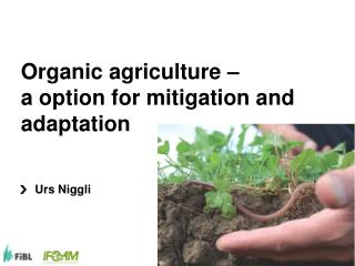Organic agriculture   a option for mitigation and adaptation