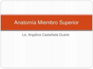 Anatom a Miembro Superior