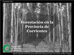 Forestaci n en la Provincia de Corrientes