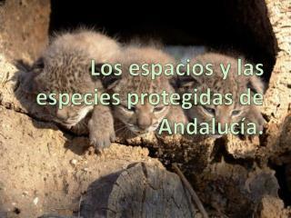 Los espacios y las especies protegidas de Andaluc a.