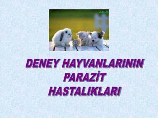 DENEY HAYVANLARININ PARAZIT HASTALIKLARI