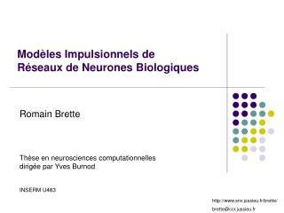 Mod les Impulsionnels de R seaux de Neurones Biologiques