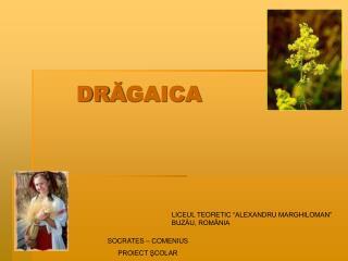 DRAGAICA