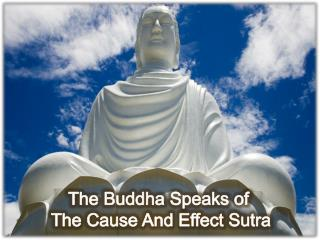 The Cause & Effect Sutra