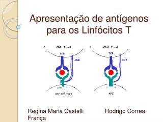 Apresenta  o de ant genos para os Linf citos T