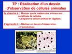 TP : R alisation d un dessin d observation de cellules animales