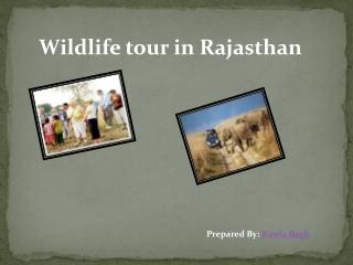 Wildlife tour in Rajasthan