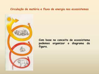 Circula  o de mat ria e fluxo de energia nos ecossistemas