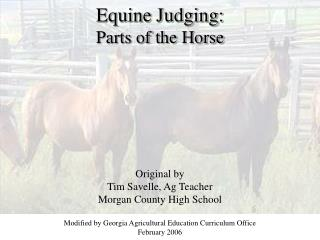 equine judging: parts of the horse