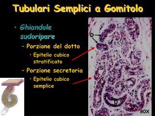 Tubulari Semplici a Gomitolo
