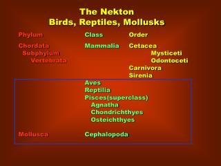 Phylum   Class  Order