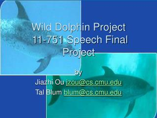 wild dolphin project 11-751 speech final project