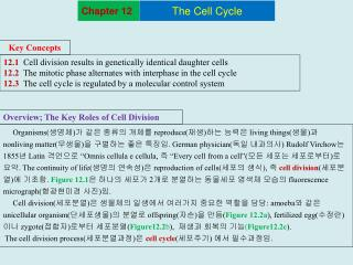 12.1  Cell division results in genetically identical daughter cells 12.2  The mitotic phase alternates with interphase i