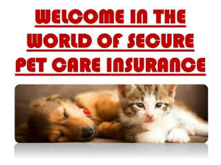 Pet Insurance Quote