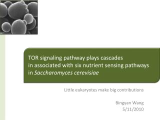 Little eukaryotes make big contributions  Bingyan Wang 5