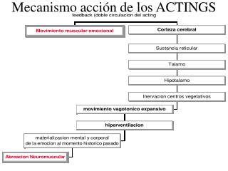 Mecanismo acci n de los ACTINGS